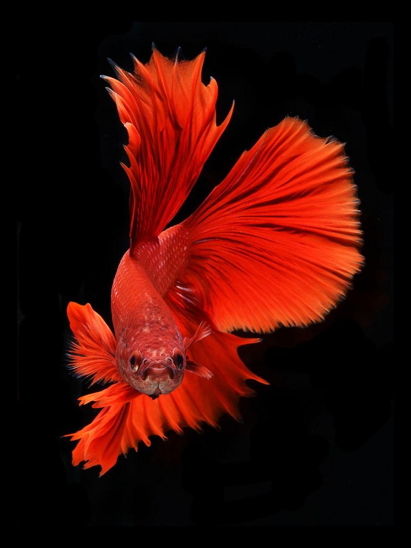 Рисунки с аквариумными рыбками