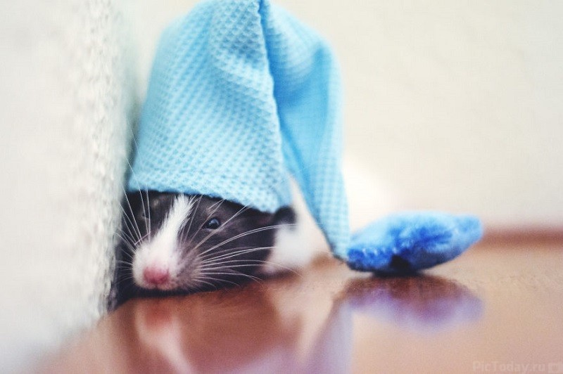 Choosing the Best Small Pet for your family  Take the Quiz