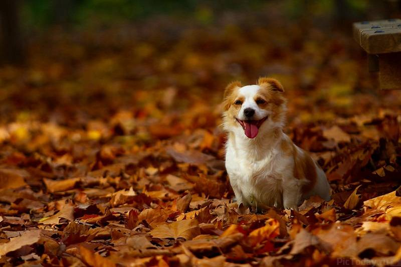 http://pictoday.ru/wp-content/uploads/2015/11/autumn-animals-18.jpg
